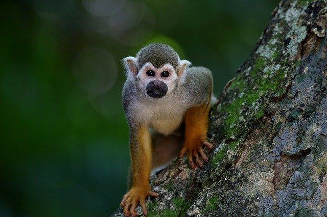 opička na stromě